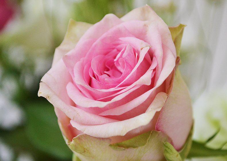 bloemen5