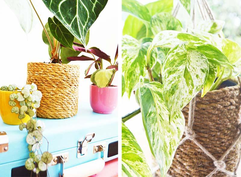 Planten in mijn werkkamer!