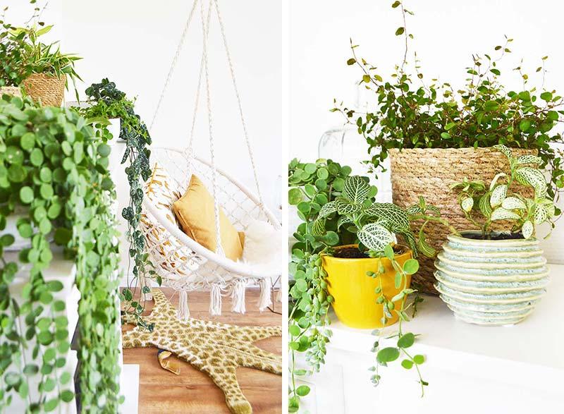 Mini planten make-over in mijn eigen huis + Winactie!