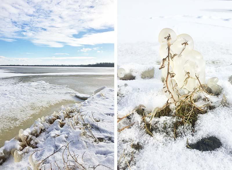 Winter Wonderland. Pareltjes uit de natuur!